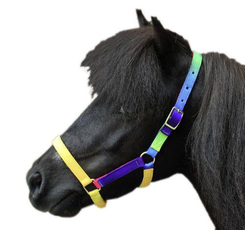 Shetland pony head collar