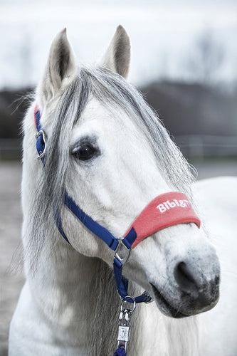 Head collar -Bibi&Tina- Denim Star