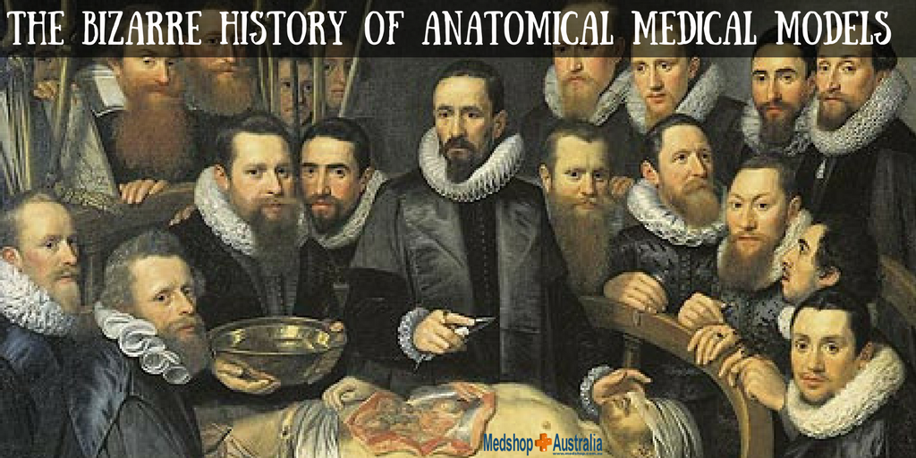 The Bizarre History of Anatomical Medical Models.png