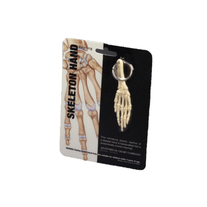 Anatomical Chart Company Key Ring Hand Key Ring