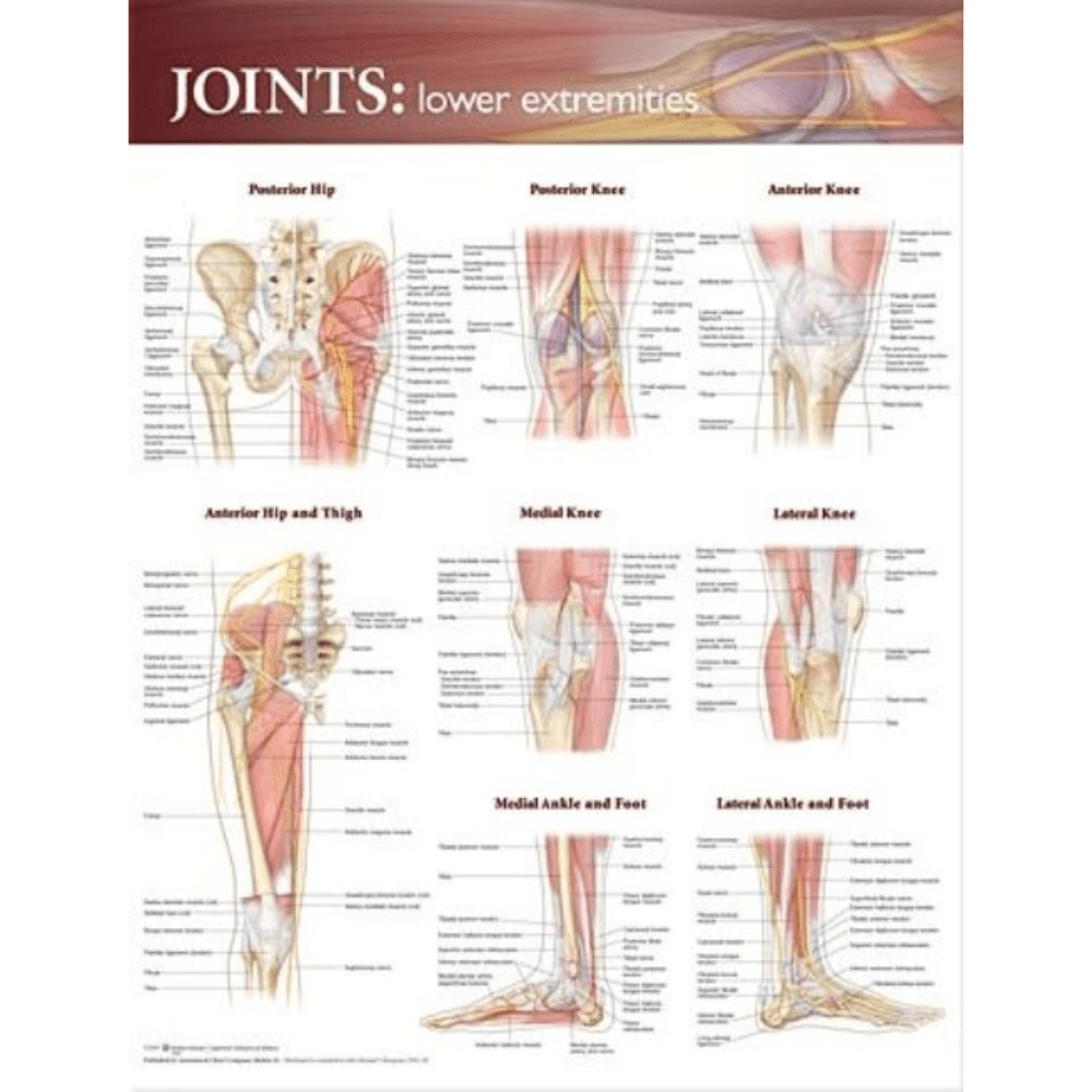 Anatomical Chart Company Anatomical Charts Joints of the Lower Extremities Anatomical Chart
