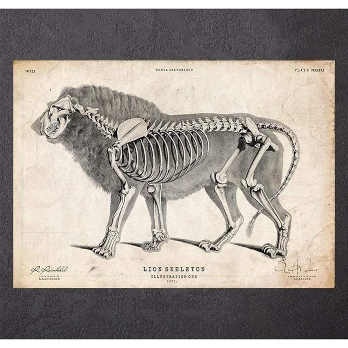 Codex Anatomicus Anatomical Print A5 Size (14.8 x 21 cm) Lion Anatomy