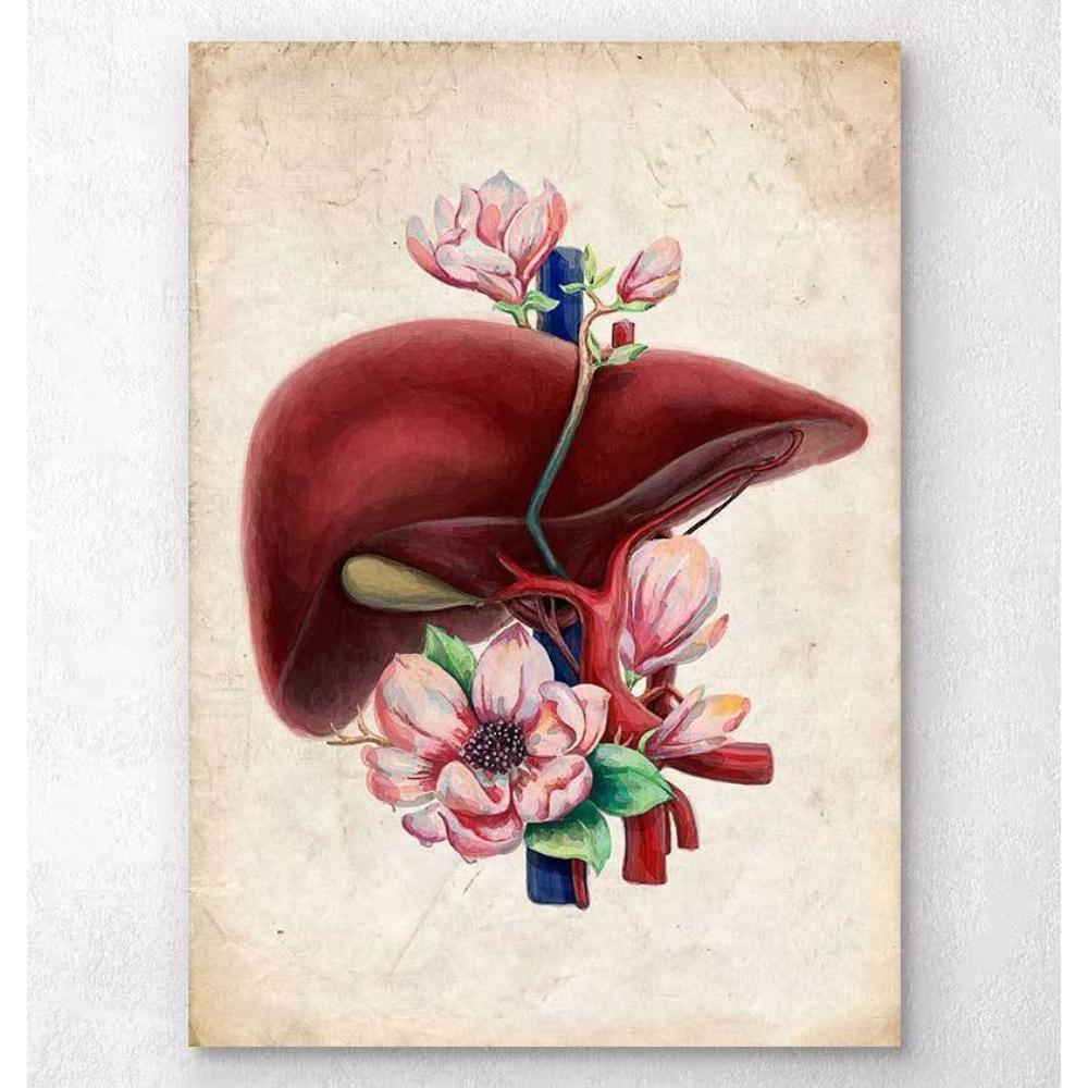 Codex Anatomicus Anatomical Print A5 Size (14.8 x 21 cm) Liver Anatomy Floral Old Paper