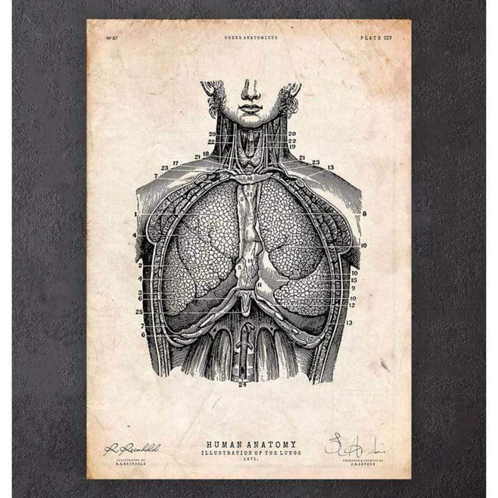 Codex Anatomicus Anatomical Print A5 Size (14.8 x 21 cm) Lung Anatomy Print