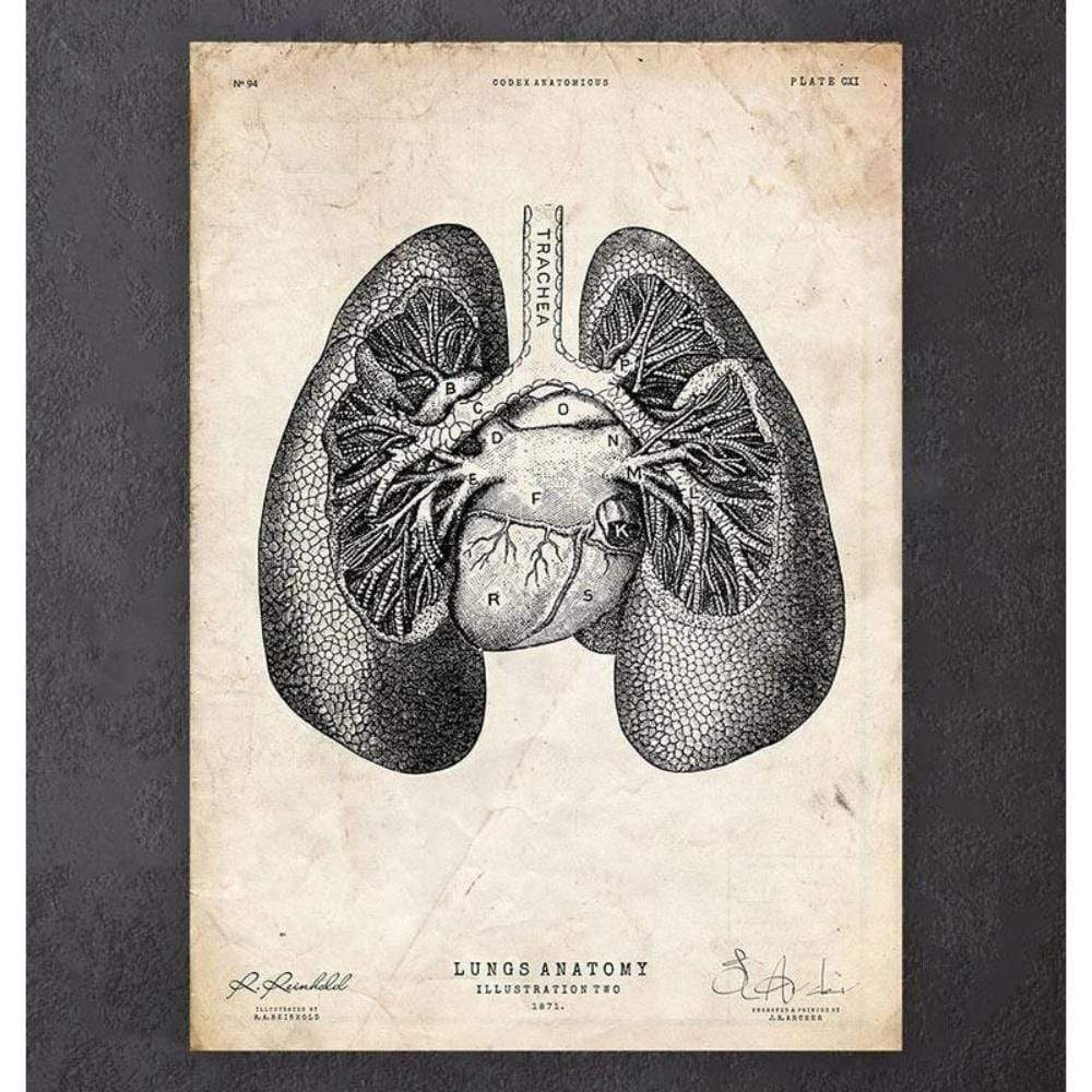 Codex Anatomicus Anatomical Print A5 Size (14.8 x 21 cm) Lung Anatomy Print II