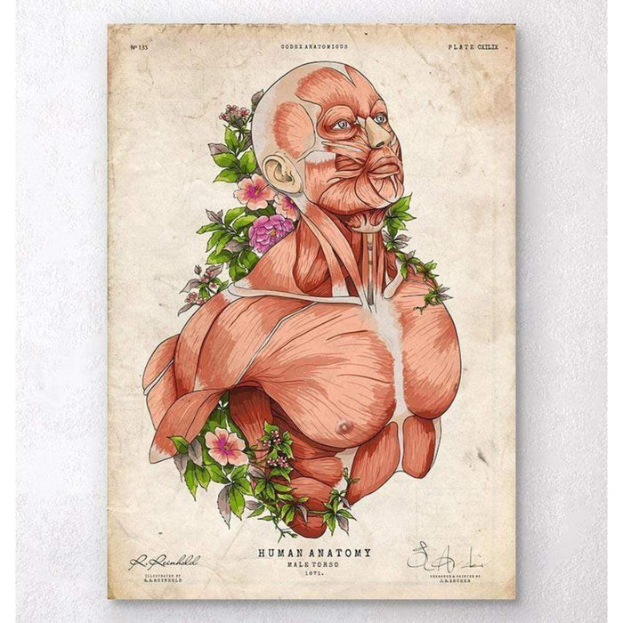 Codex Anatomicus Anatomical Print A5 Size (14.8 x 21 cm) Male Body Anatomy Art