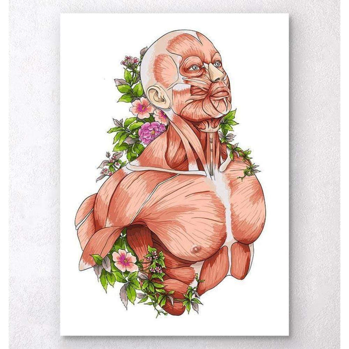 Codex Anatomicus Anatomical Print A5 Size (14.8 x 21 cm) Male Body Anatomy Art White