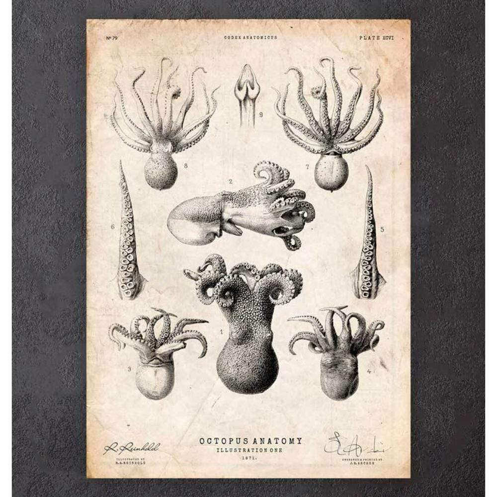 Codex Anatomicus Anatomical Print A5 Size (14.8 x 21 cm) Octopus Anatomy Print