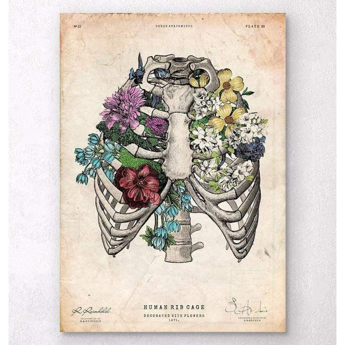 Codex Anatomicus Anatomical Print A5 Size (14.8 x 21 cm) Rib Cage Print Colored