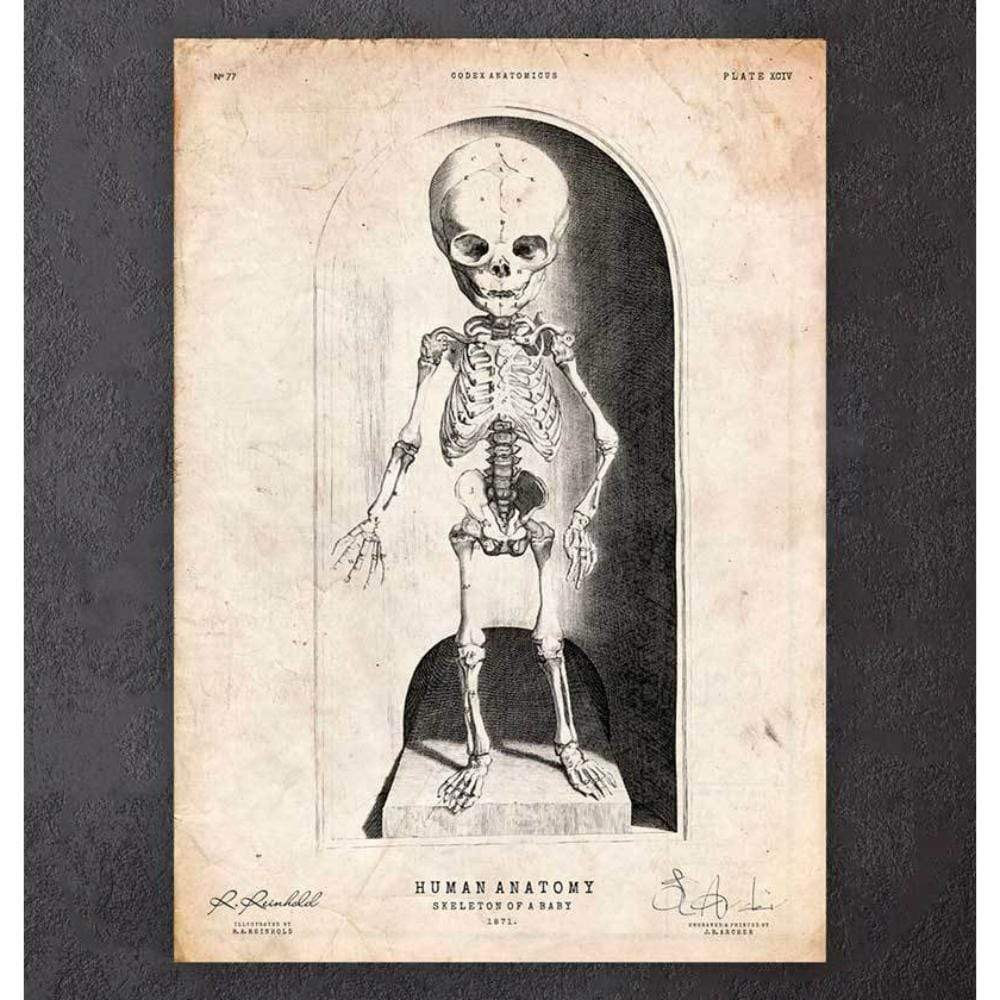 Codex Anatomicus Anatomical Print A5 Size (14.8 x 21 cm) Skeleton Of A Baby Anatomy Print