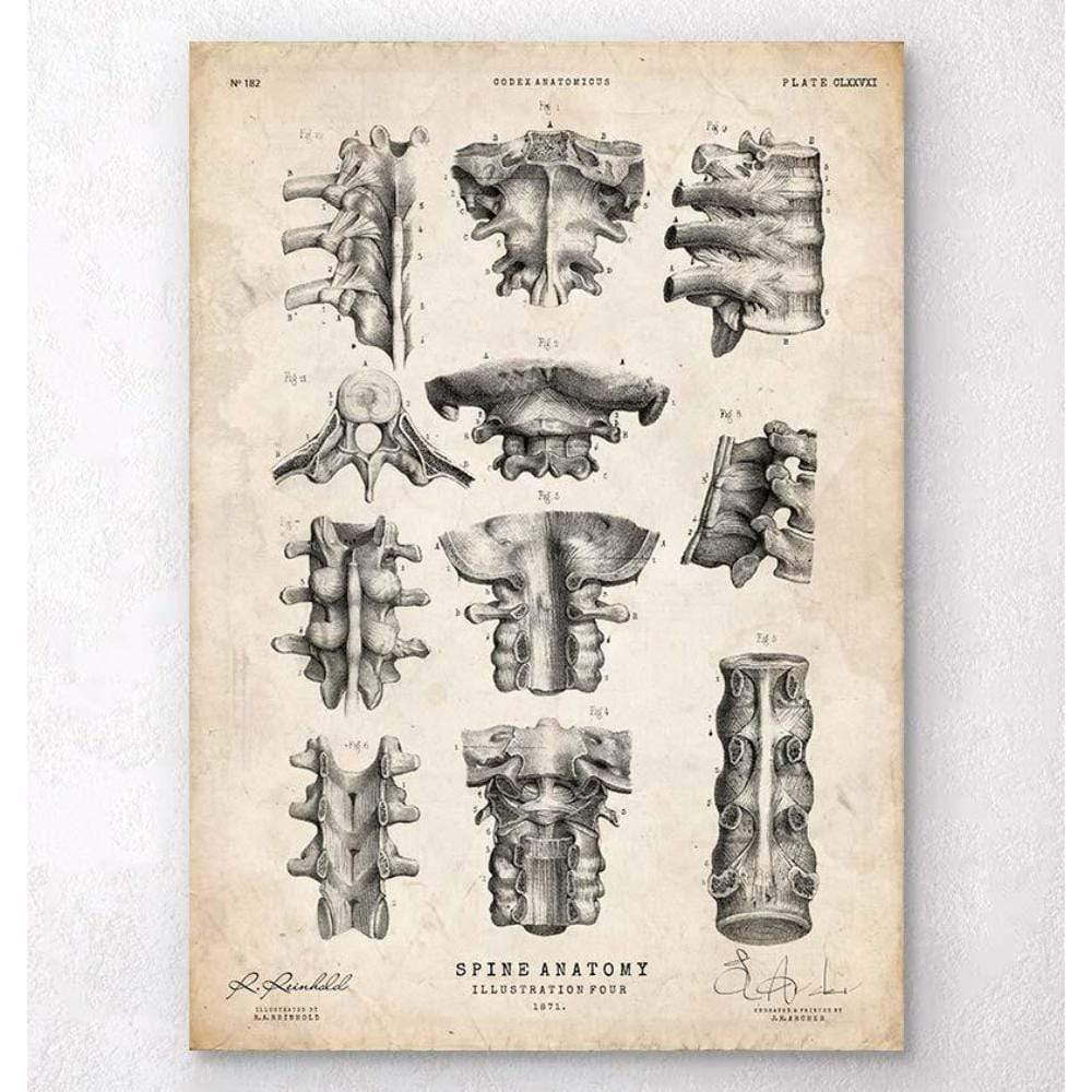 Codex Anatomicus Anatomical Print A5 Size (14.8 x 21 cm) Spine Anatomy Poster