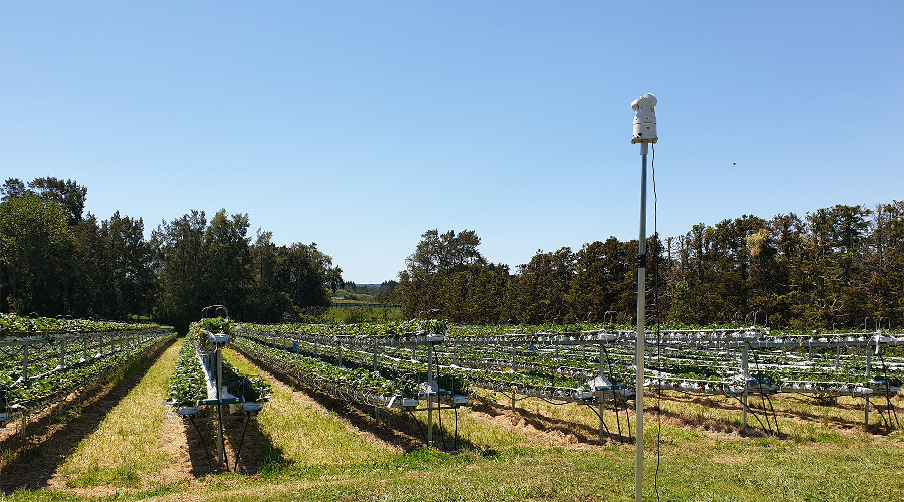 Laser bird deterrents for crops and vineyards – it's now a reality