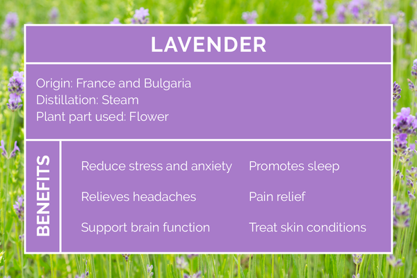 Benefits Uses Of Lavender Essential Oil Eco Modern Essentials
