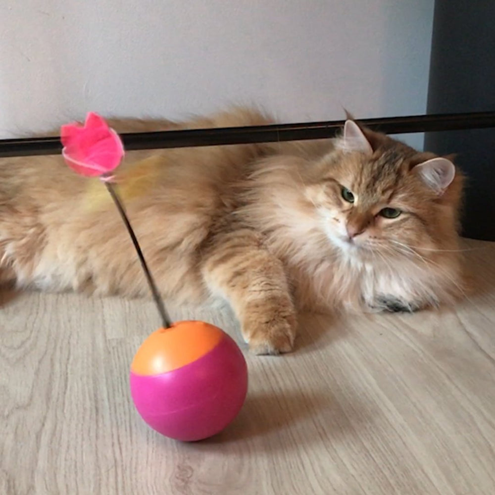 Cat Toys - Multifunctional Tumbler Teaser Cat Toy