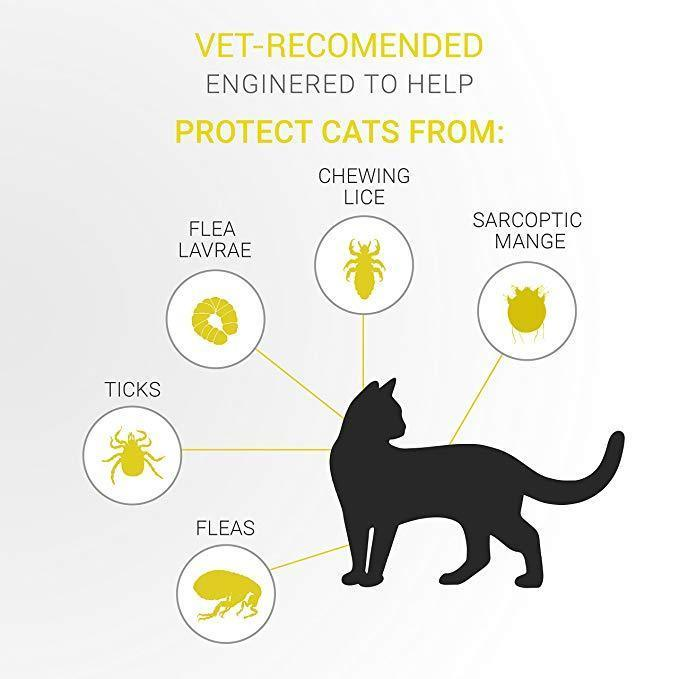 Innovative Flea And Tick Guard Collar For Cats [100% Natural]
