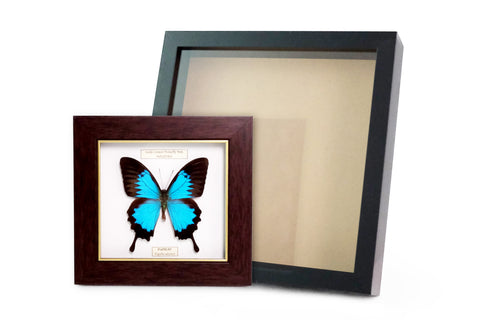 IKEA Black Ribba Frame & Blue Butterfly Photo Frame