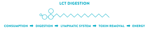 healthy fats diagram for long chain triglyceride digestion