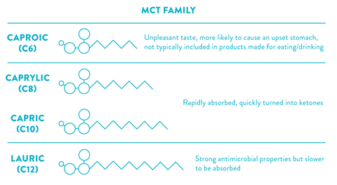 healthy fats diagram show the different MCTs: caproic, caprylic, capric, lauric