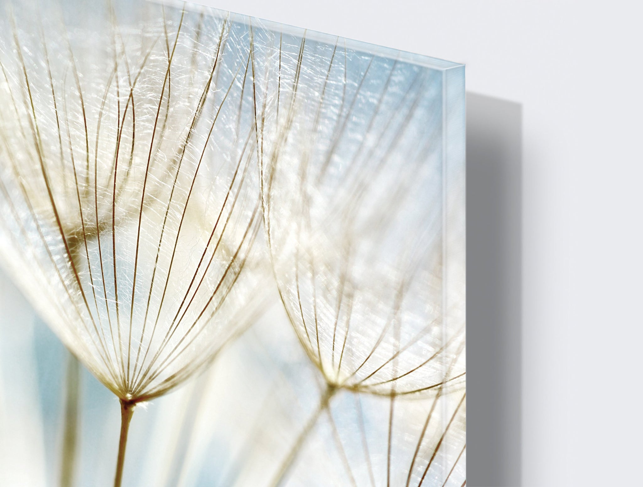 Art wall pictures Dandelion - AP039 - Art Life Decor