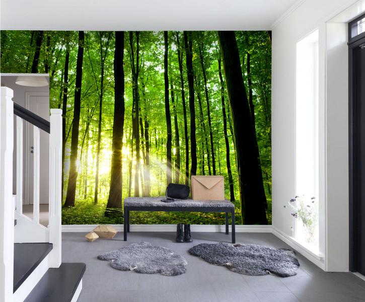 Wallpaper beautiful green forest SW243