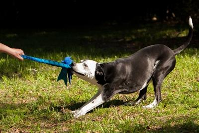 Fleece Tug - Tough Toys For Dogs