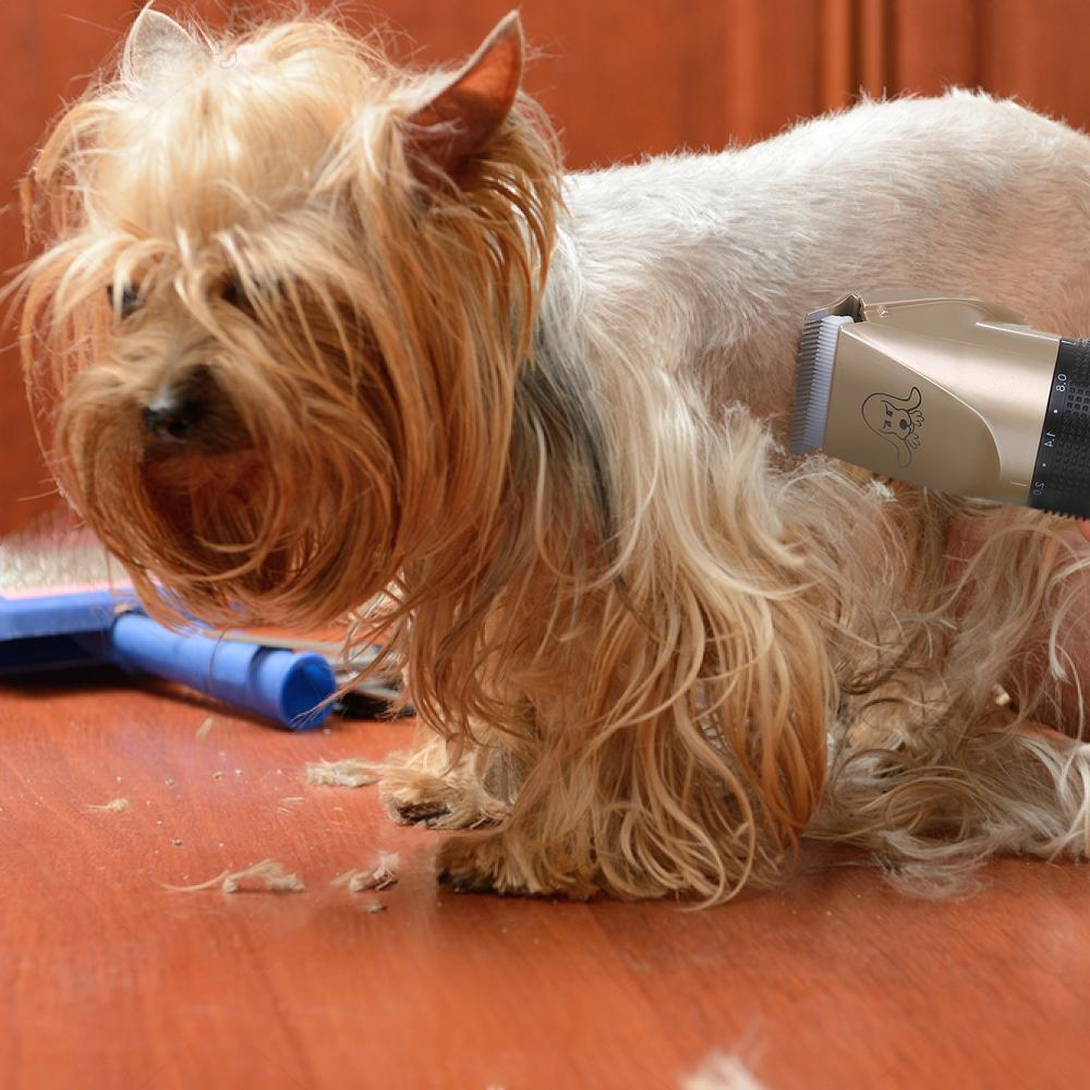 SPECIAL OFFER!! - NOISE-FREE DESIGN PET HAIR CLIPPER - 50% OFF