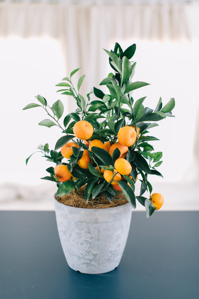 CNY Mandarin Orange Lucky Tree