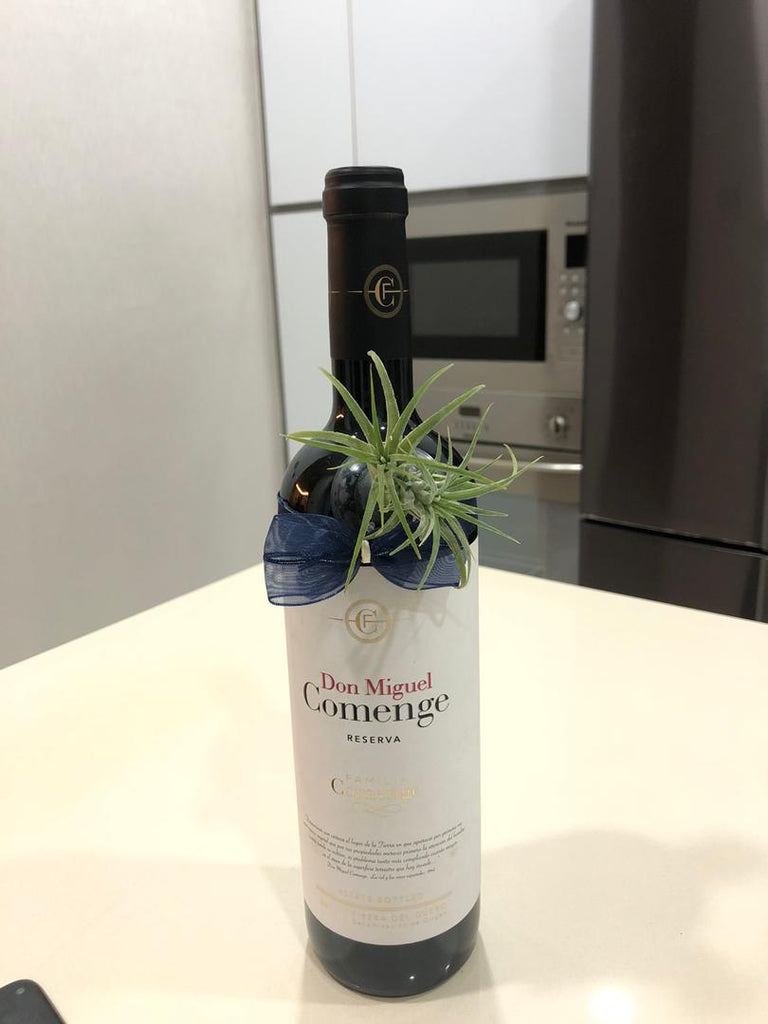 Airplant on bottle (excluding wine)