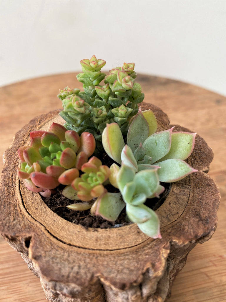 Super Mini Succulent Wooden Pot Set