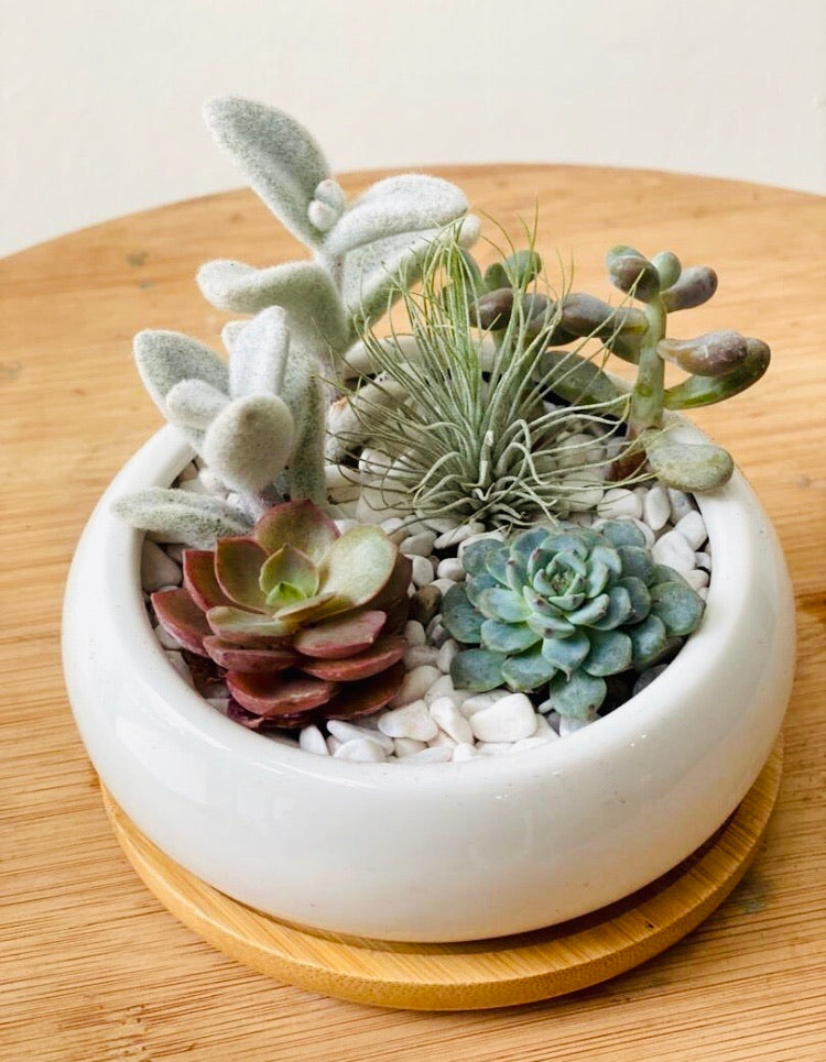 Mini Succulent with Airplant Arrangement