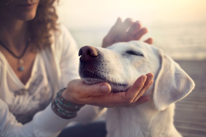 10 Things You Should Know About The Benefits of CBD Oil for Dogs