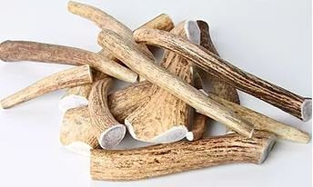 Naturally Shed Deer Antler - Extra Large-L'Barkery-Bad Wolf Boutique