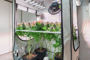 Home Grow Classes in Chicago