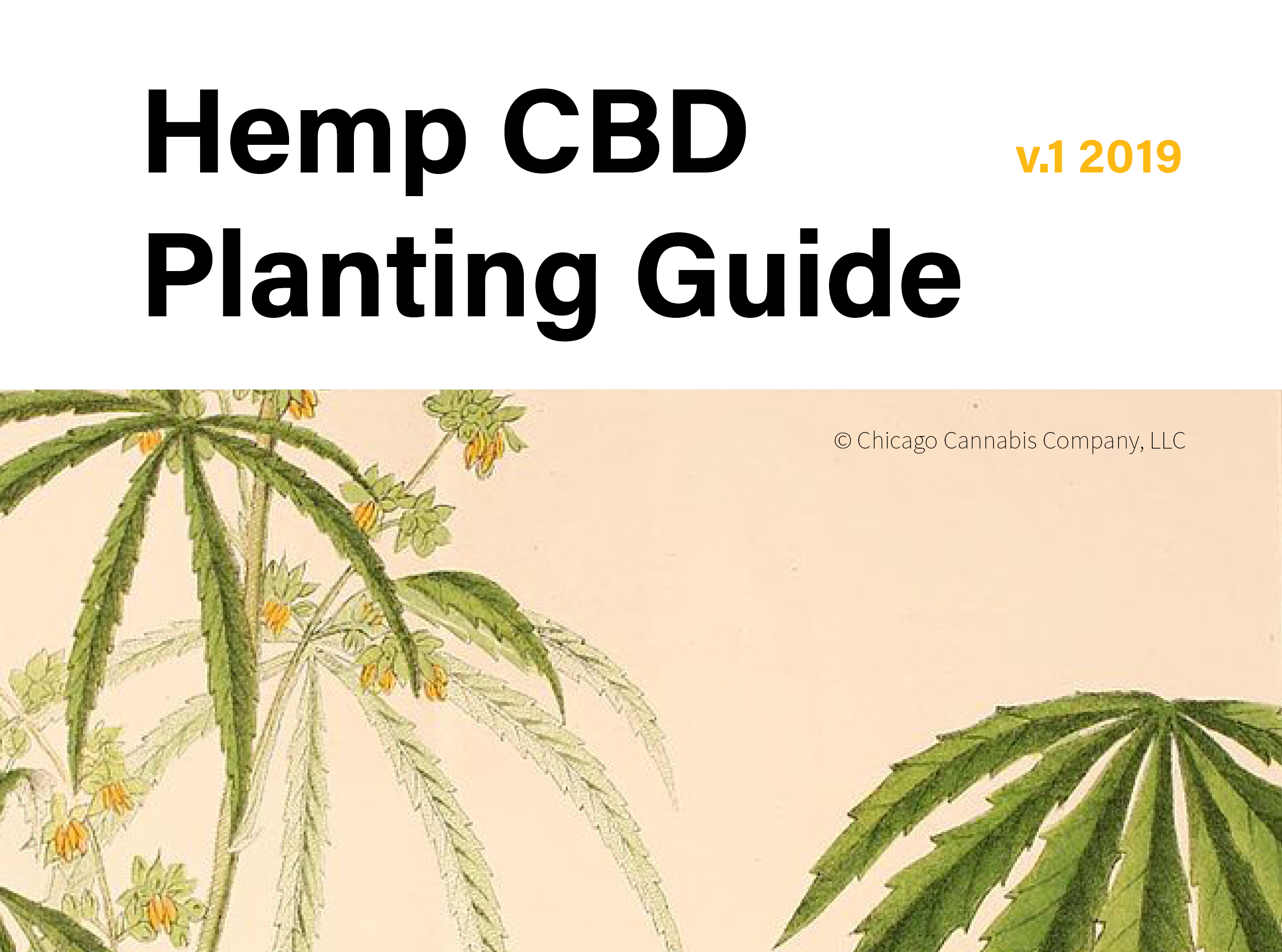 How to Grow Hemp for CBD – Chicago Cannabis Company