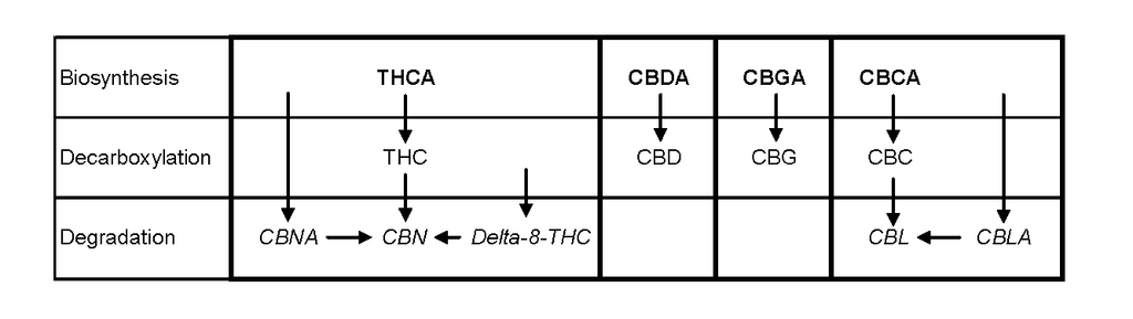Biosynthesis, Decarboxylation, Degradation