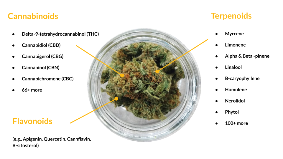 cannabinoids and terpenes in cannabis