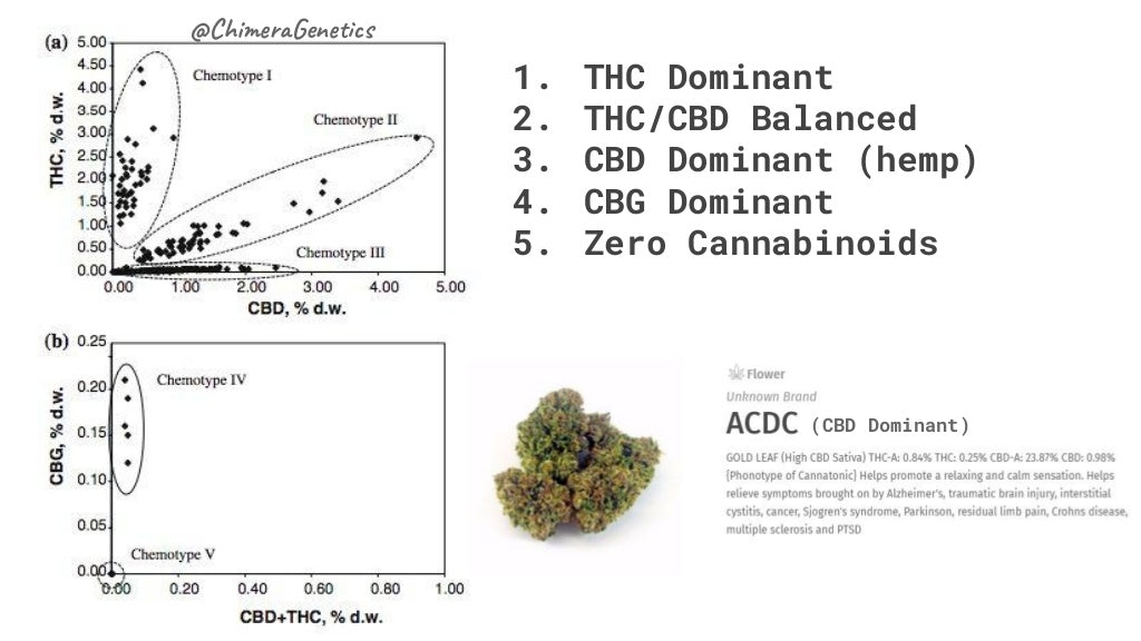 cannabis chemotypes