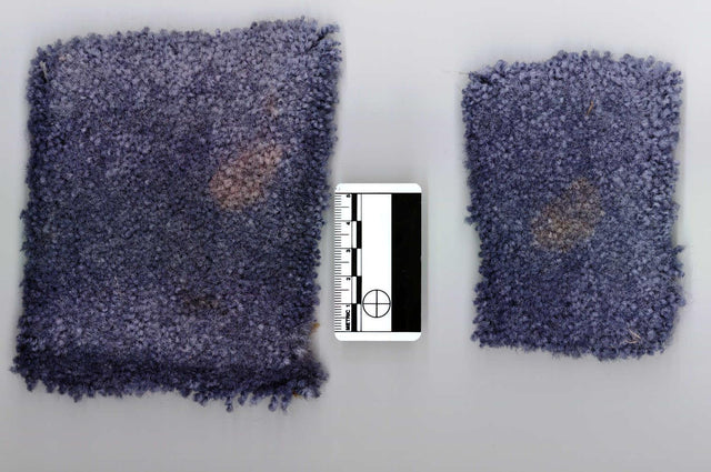 Two small cutouts of stained carpet from a crime scene next to a forensic ruler for court evidence