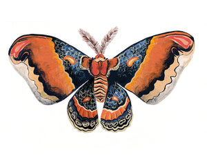 colorful orange moth butterfly illustration painting