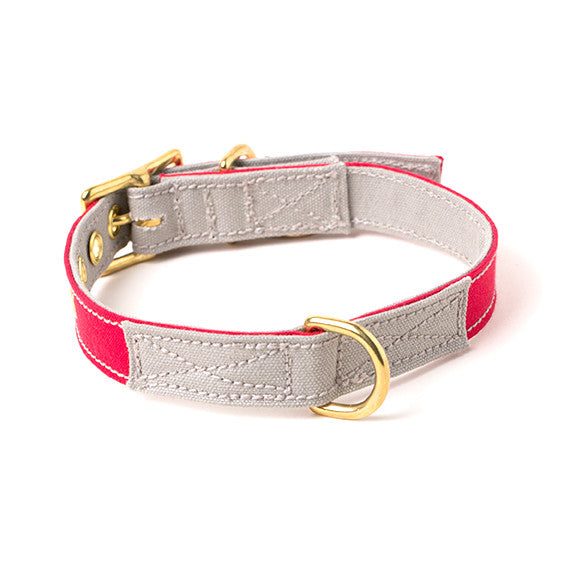 The Standard x Found My Animal Canvas Dog Collar