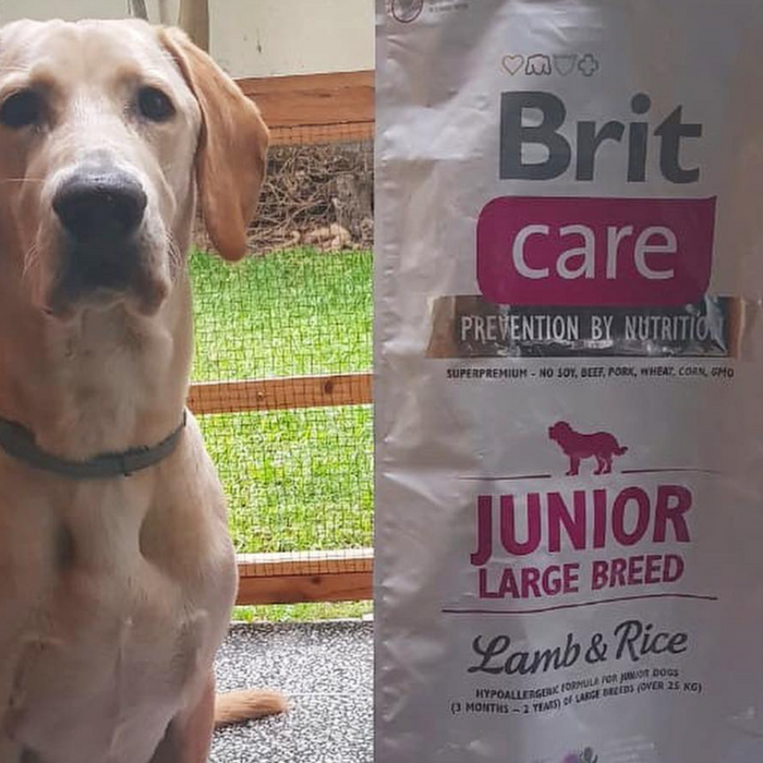 Alimento para perros Junior Large Breed Cordero Brit Care. Bulldog, Poodle, Pug, Golden retriever visita veterinaria en chicureo alimentos