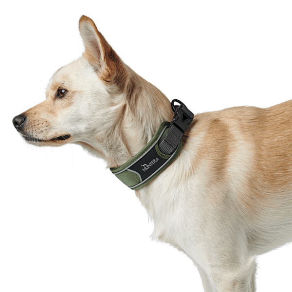 Collar para perros Divo Hunter