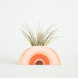 Pink Rainbow Planter + Air Plant