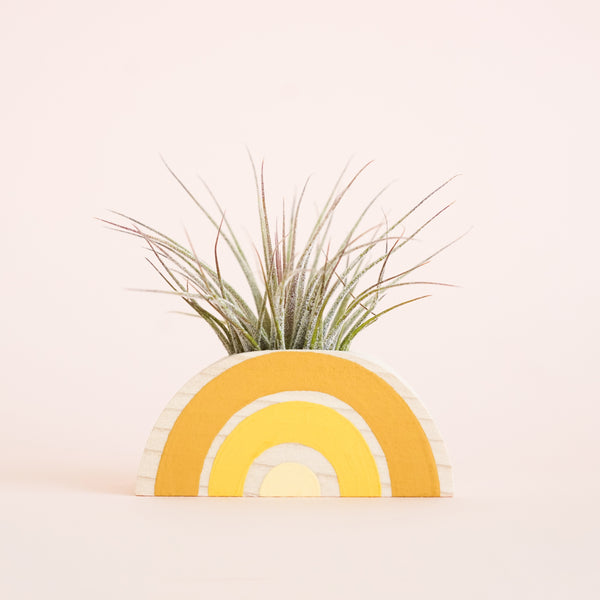 Yellow Rainbow Planter + Air Plant
