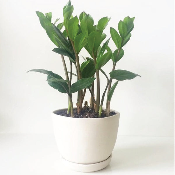 White Handmade Tabletop Planter