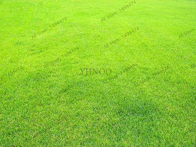 1000pcs/pack, High Quality China Lawn grass seed ,home garden and courtyard grass seeds,easy to grow.  UpCube- upcube