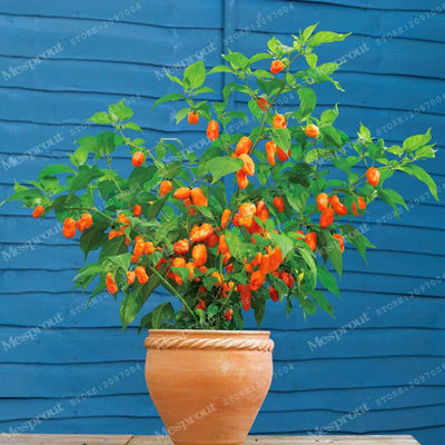 "100PCS SEEDS - 100% Genuine Fresh Rare Red ""Carolina Reaper"" Pepper Seeds (hot chilli ) Organic Vegetable Seeds * Free Shipping  UpCube- upcube"