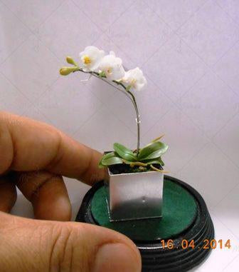 100pcs / bag Rare butterfly orchid flower seeds, a variety of styles of bonsai flower seeds. Plant family garden  UpCube- upcube