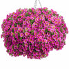100% Real Pink,Blue,Green Petunia Mix Seed, 200 Seed/Pack, Fragrant 'Garden calibrachoa' Hanging Ornamental Flowers Plant