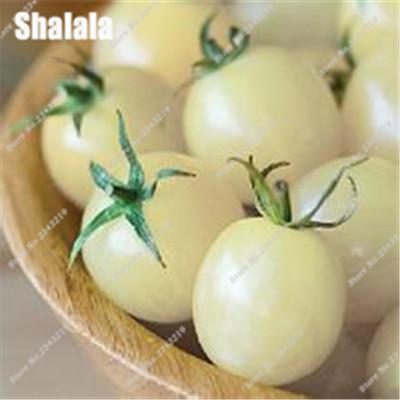 100pcs Four Colors Cherry Tomato Seeds Vegetables And Fruits Seed Easy To Grow Bonsai For Home Garden & Balcony  UpCube- upcube